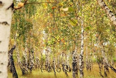 Осень, альбом Природа Тулуна и нашего региона